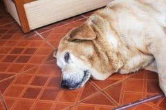 Ζωικό χαριτωμένο πρόσωπο κινηματογραφήσεων σε πρώτο πλάνο σκυλιών στοκ εικόνα με δικαίωμα ελεύθερης χρήσης