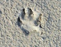 ζωικό footstamp s Στοκ φωτογραφίες με δικαίωμα ελεύθερης χρήσης