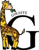Ζωικό Giraffe αλφάβητου Στοκ Εικόνες