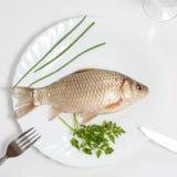 ζωντανά ψάρια Στοκ Εικόνες