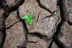 Ζωντανός με την ξηρασία, αναγεννημένο δέντρο, ραγισμένο έδαφος στοκ εικόνα