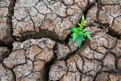 Ζωντανός με την ξηρασία, αναγεννημένο δέντρο, ραγισμένο έδαφος στοκ φωτογραφίες με δικαίωμα ελεύθερης χρήσης