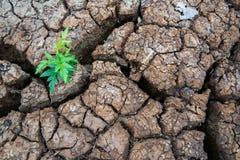 Ζωντανός με την ξηρασία, αναγεννημένο δέντρο, ραγισμένο έδαφος στοκ φωτογραφία