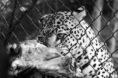 Ζωολογικός κήπος Entebbe κατά μήκος της λίμνης Βικτώρια στην Ουγκάντα Στοκ φωτογραφίες με δικαίωμα ελεύθερης χρήσης