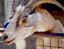 Ζωολογικός κήπος Petting, ανοίξεις της Bonnie Κόκκινη περιοχή συντήρησης βράχου, Νεβάδα, ΗΠΑ Στοκ φωτογραφία με δικαίωμα ελεύθερης χρήσης