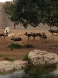 Ζωολογικός κήπος Al ain Στοκ εικόνα με δικαίωμα ελεύθερης χρήσης