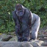 Ζωολογικός κήπος Taronga στο Σίδνεϊ Στοκ φωτογραφία με δικαίωμα ελεύθερης χρήσης