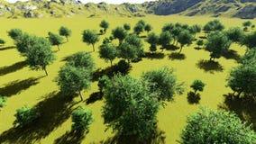 Ζωτικότητα δέντρων κέδρων απόθεμα βίντεο