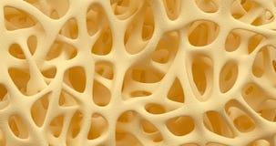 Ζωτικότητα οστεοπόρωσης κόκκαλων διανυσματική απεικόνιση