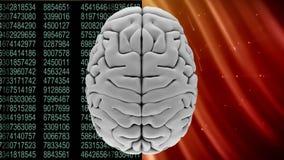 Ζωτικότητα της κορυφής ενός γκρίζου εγκεφάλου ενάντια δυαδικοί κώδικες και αστέρια διανυσματική απεικόνιση