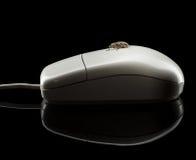 Ζωύφιο στο ποντίκι υπολογιστών Στοκ Φωτογραφίες