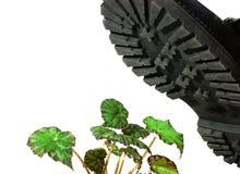 ζωώδες στρατιωτικό φυτό μπ Στοκ Εικόνα