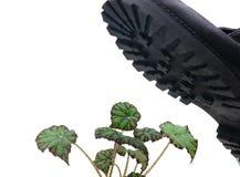 ζωώδες στρατιωτικό φυτό μπ Στοκ φωτογραφίες με δικαίωμα ελεύθερης χρήσης