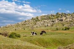 Ζώα αγελάδων στην πλευρά Στοκ Φωτογραφίες