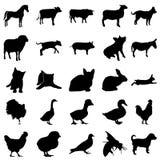 Ζώα αγροκτημάτων 25 απλό εικονίδιο στο ζωηρόχρωμο υπόβαθρο Στοκ Εικόνα