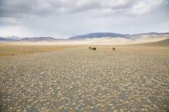 Ζώα αγροκτημάτων στο μογγολικό τοπίο Στοκ Εικόνα
