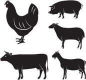 Ζώα αγροκτημάτων Στοκ φωτογραφία με δικαίωμα ελεύθερης χρήσης