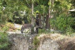 Ζώα ενός ατόμων περπατήματος από έναν απότομο βράχο Στοκ Εικόνες