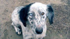 Ζώα ζωολογικών κήπων, σκυλιά στοκ φωτογραφίες