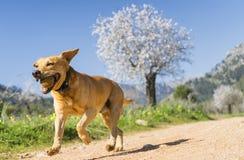 ζώα κατοικίδιων ζώων, σκυλιά Στοκ Εικόνες