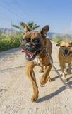 ζώα κατοικίδιων ζώων, σκυλιά Στοκ εικόνες με δικαίωμα ελεύθερης χρήσης