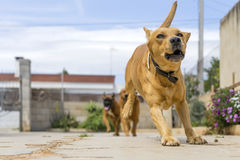 ζώα κατοικίδιων ζώων, σκυλιά Στοκ φωτογραφία με δικαίωμα ελεύθερης χρήσης