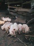 Ζώα μωρών Στοκ φωτογραφία με δικαίωμα ελεύθερης χρήσης