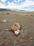 ζώα νεκρά Στοκ Φωτογραφία