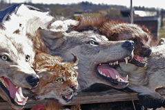 ζώα που γεμίζονται Στοκ Εικόνες