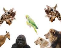 ζώα που τίθενται Στοκ φωτογραφίες με δικαίωμα ελεύθερης χρήσης