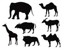 Ζώα σαφάρι Στοκ Εικόνες