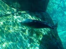 Ζώα σε έναν ζωολογικό κήπο Στοκ εικόνες με δικαίωμα ελεύθερης χρήσης