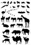 Ζώα σκιαγραφιών Στοκ Φωτογραφίες