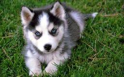 Ζώα σκυλιών Στοκ Εικόνες