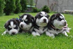 Ζώα σκυλιών Στοκ Εικόνα