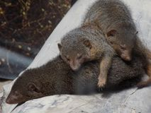 Ζώα στήριξης Στοκ φωτογραφία με δικαίωμα ελεύθερης χρήσης