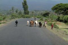 Ζώα στις οδούς της Αιθιοπίας Στοκ εικόνα με δικαίωμα ελεύθερης χρήσης