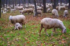 Ζώα στο genere Στοκ Φωτογραφία