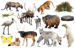 Ζώα της Ασίας που απομονώνονται Στοκ Φωτογραφία