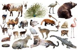 Ζώα της Ασίας που απομονώνονται Στοκ φωτογραφίες με δικαίωμα ελεύθερης χρήσης