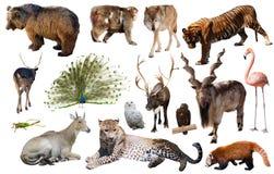 Ζώα της Ασίας που απομονώνονται Στοκ φωτογραφία με δικαίωμα ελεύθερης χρήσης