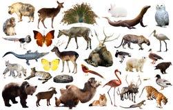 Ζώα της Ασίας που απομονώνονται Στοκ Εικόνες