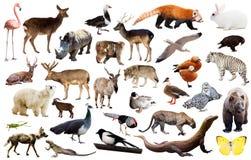 Ζώα της Ασίας που απομονώνονται Στοκ Φωτογραφίες