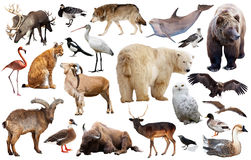 Ζώα της Ευρώπης που απομονώνονται Στοκ Εικόνα