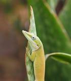 Ζώα της Κούβας Στοκ φωτογραφίες με δικαίωμα ελεύθερης χρήσης