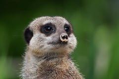 ζώα χαριτωμένα λίγα Στοκ φωτογραφίες με δικαίωμα ελεύθερης χρήσης