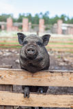 Ζώα χώρας που αυξάνονται στους φιλικούς προς το περιβάλλον όρους με προσοχή και την αγάπη Στοκ Εικόνα