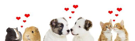 ζώα δύο Στοκ εικόνα με δικαίωμα ελεύθερης χρήσης