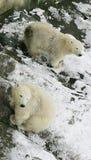 ζώα Στοκ Φωτογραφίες