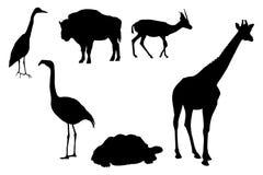 ζώα απεικόνιση αποθεμάτων